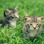 Уход за новорожденным котенком