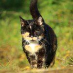 Одомашнивание кошек
