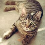 Полигон для кошек