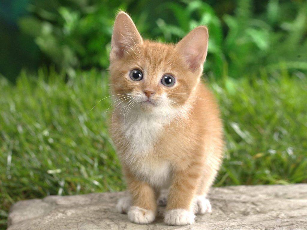 41633-cats-cat