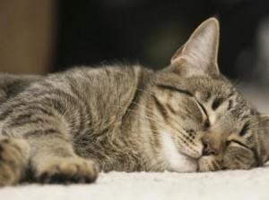 naptime-for-baxter