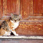 Когда незнакомая кошка приходит в дом