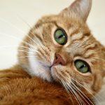 Кошачий язык расшифруют через пять лет