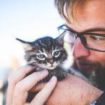 Ученые выяснили влияние кошек на здоровье мужчин