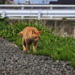 Стоит ли выпускать домашнего кота погулять на улицу