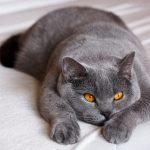 ТОП-5 самых добрых кошек