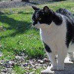 Почему кошки перед смертью уходят из дома