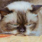 5 главных причин почему кошка на вас обиделась
