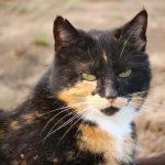 Ветеринары рассказали, кошки какого цвета недолюбливают людей