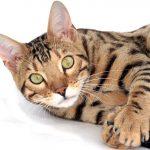 Домашние коты и их кодекс чести, о котором нельзя рассказывать без улыбки