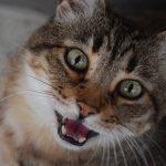 Почему кошки мяукают по ночам