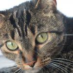 Как кошка рассказывает о присутствии негатива в доме