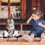 IQ кошек соответствует уму 3-летнего ребенка