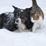 Ученые выяснили, кто умнее – кошки или собаки