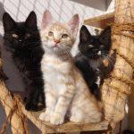 5 пород кошек, которые в душе – собаки
